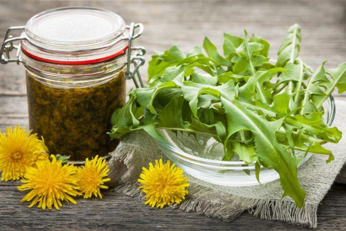 Одуванчик лечебные свойства и противопоказания рецепты, фото